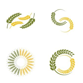 Logotipo de trigo paddy