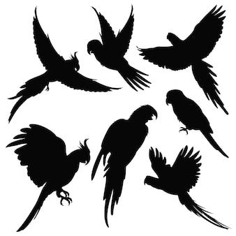 Loros de vectores, siluetas de aves de selva amazónica aislados en blanco