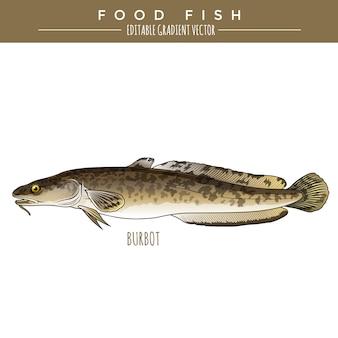 Lota. comida marina pescado