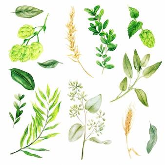 Lúpulo y orejas, hojas y ramas, verde brillante de acuarela