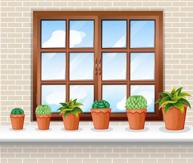 Macetas cerca de la ventana.