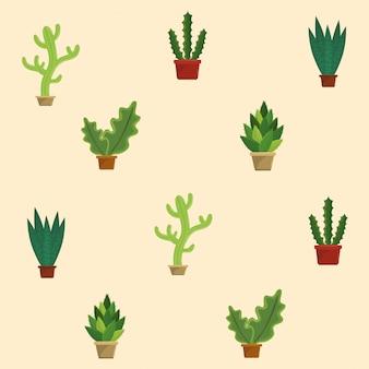 Macetas de plantas suculentas de cactus