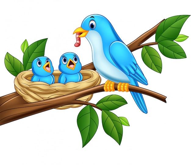 Madre azul pájaro alimentando a los bebés en un nido