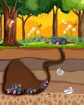 Madriguera de animales subterránea con familia de topo
