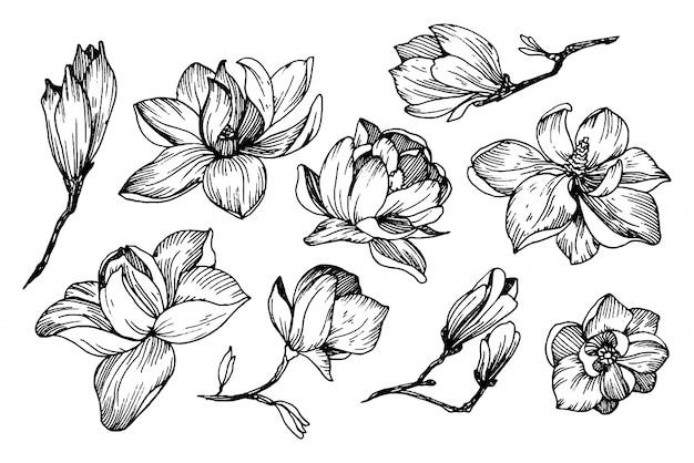 Magnolia flores en estilo de grabado