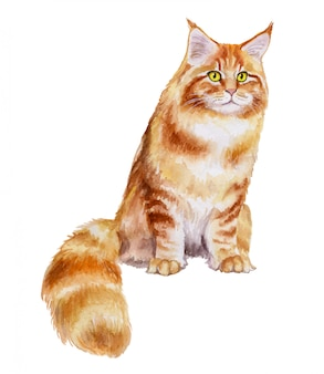 Maine coon cat breed en acuarela