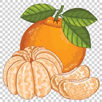 Mandarina aislada en transparente