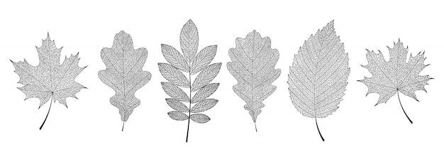 Mano dibuja esqueletos de hojas negras.