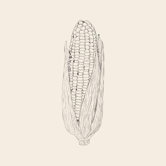 Mano dibuja la ilustración de vector de mazorca de maíz