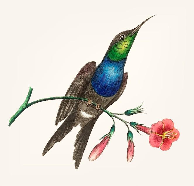 Mano dibujada de colibrí