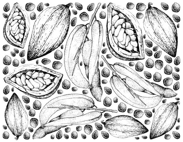 Mano dibujada de dedos del hombre muerto y theobroma cacao fruits