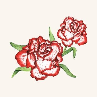 Mano dibujada flor de clavel aislada