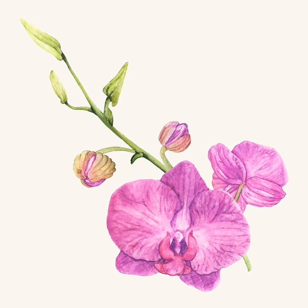 Mano dibujada flor de la orquídea aislada