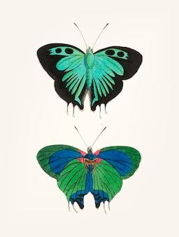 Mano dibujada de mariposa negra de cola doble