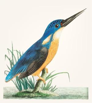 Mano dibujada de martín pescador azul profundo
