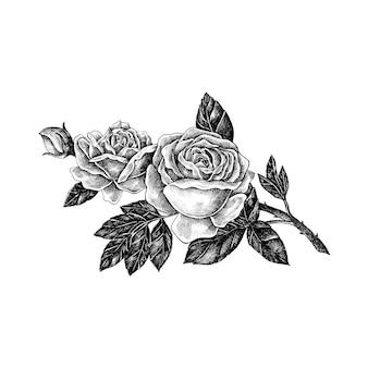 Mano dibujada rosa aislada sobre fondo blanco