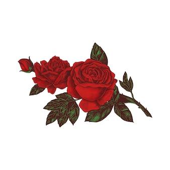 Mano dibujada rosa roja aislada sobre fondo blanco