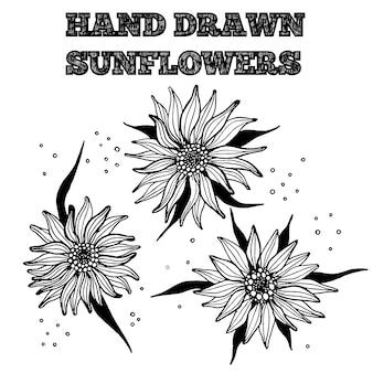 Mano dibujada tinta girasol. ilustración de vector de flores blancas y negras aisladas