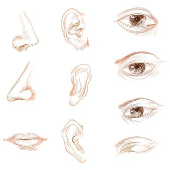 Mano dibujar croquis órganos de biología humana establece anatomía