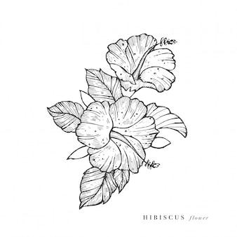 Mano dibujar ilustración de flores de hibisco. guirnalda floral tarjeta floral botánica sobre fondo blanco.