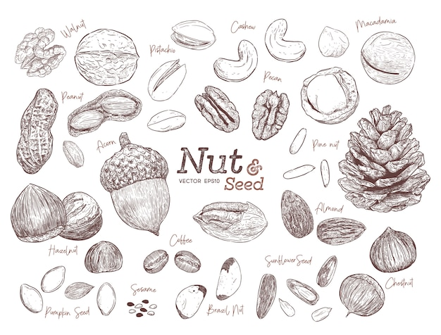 La mano de la nuez y de la semilla de la colección dibuja el vector del bosquejo.