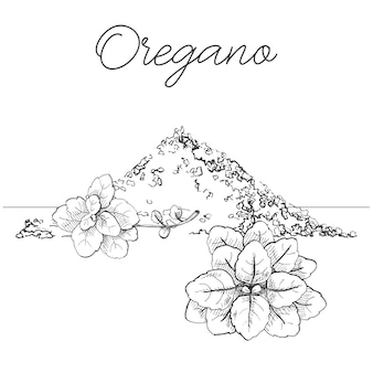 Manojo de orégano dibujado a mano. orégano fresco aislado sobre fondo blanco. ilustración de un estilo de dibujo.