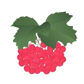 Manojo de viburnum rojo maduro con hojas.