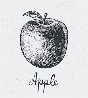 Manzana dibujada a mano, estilo de grabado, lápiz negro dibujado a mano, aislado.