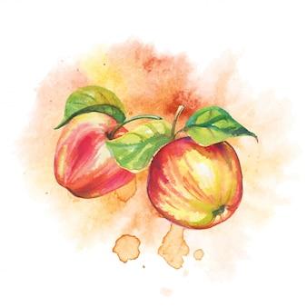 Manzanas maduras en acuarela