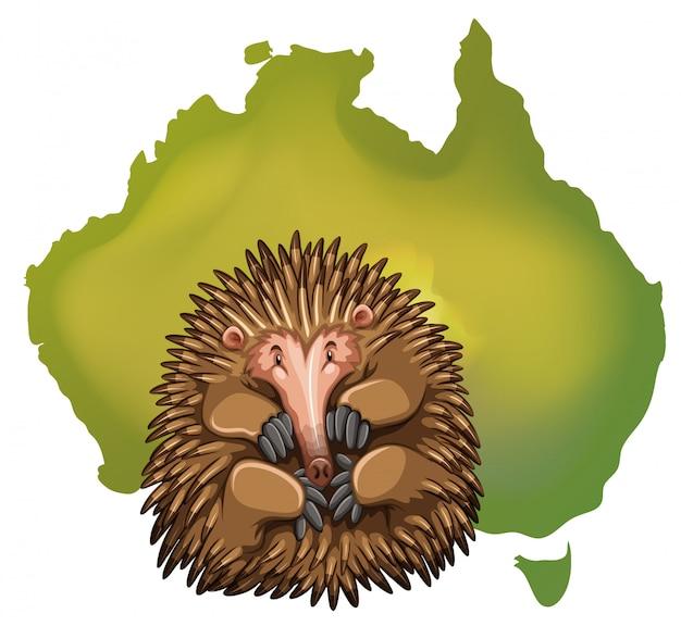 Mapa de echidna y australia