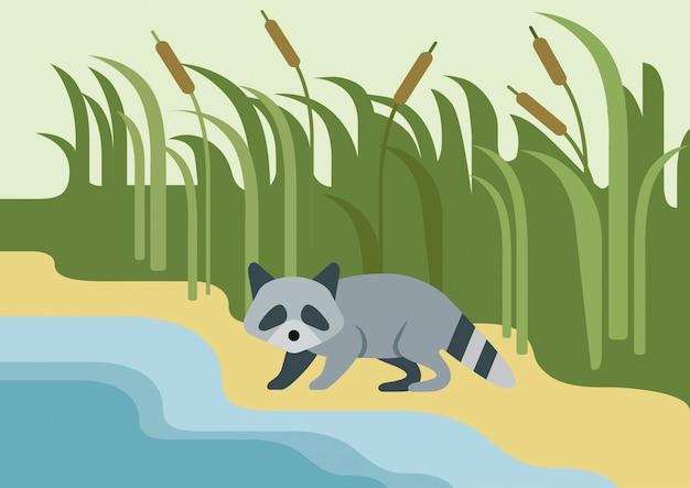 Mapache plano de dibujos animados, animal salvaje en la orilla del río.