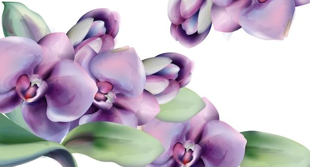 Marco de acuarela de flores de orquídea