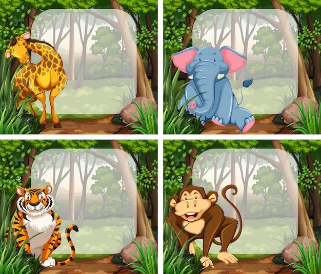 Marco con animales salvajes en selva.