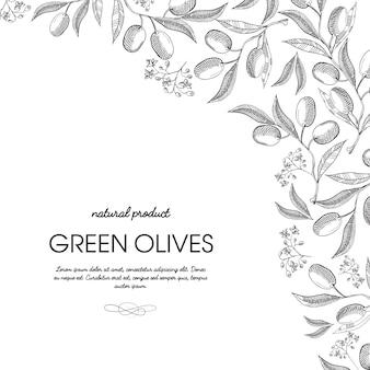Marco de esquina elegante adorno de desplazamiento grabado aceitunas verdes racimos borde dibujado a mano ilustración de tarjeta de doodle