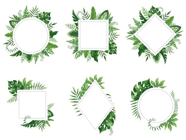 Marco exótico de la hoja. tarjeta de hojas de primavera, marcos de árboles tropicales y conjunto aislado de frontera floral vintage selva