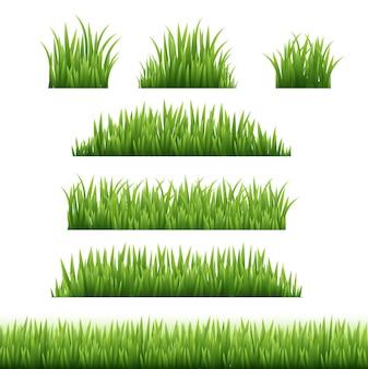 Marco hierba verde conjunto sobre fondo transparente
