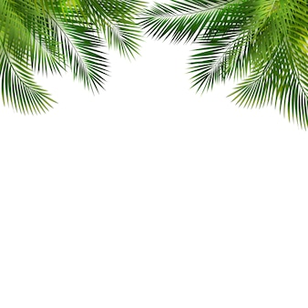 Marco con hoja de palma verde sobre fondo blanco