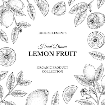 Marco de limón vintage dibujado a mano