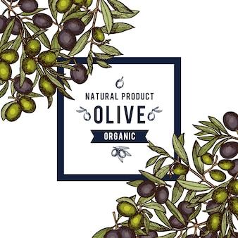 Marco con lugar para texto y mano dibujado ramas de olivo coloreadas en esquinas