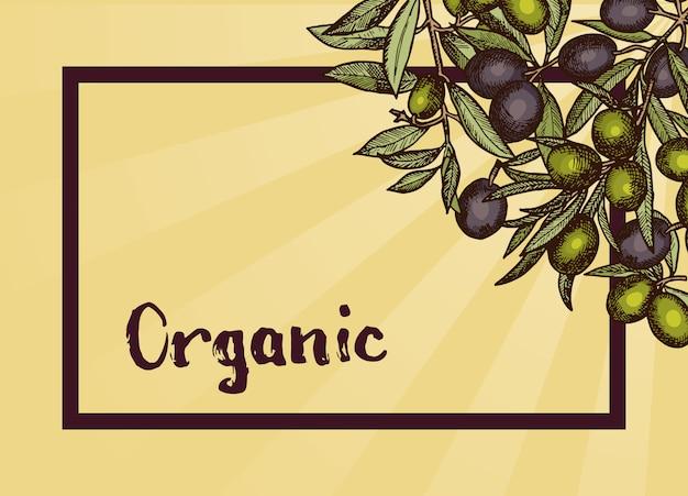 Marco con lugar para texto y ramas de olivo dibujadas a mano en esquina y rayos de sol.
