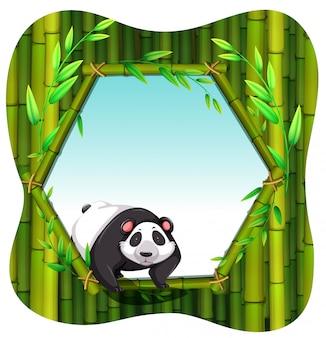 Marco de panda