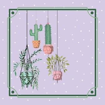 Marco con plantas de interior y cactus colgando en macrame.
