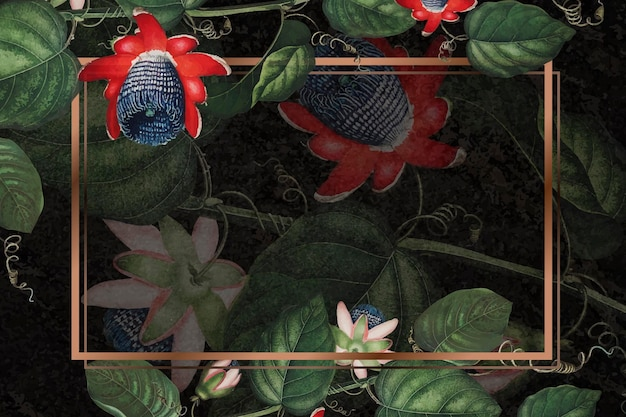 El marco rectangular de la flor de la pasión alada.