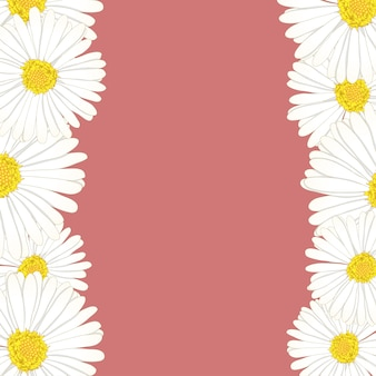 Margarita flor frontera