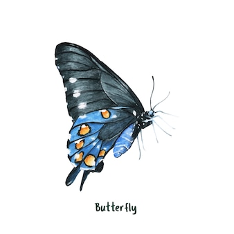Mariposa dibujada mano aislada sobre fondo blanco