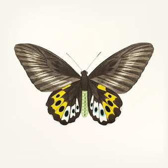 Mariposa dibujada a mano