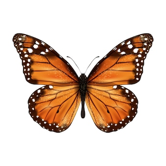 Mariposa realista aislado