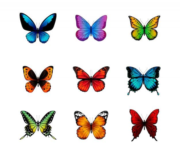 Mariposas aisladas sobre fondo blanco.