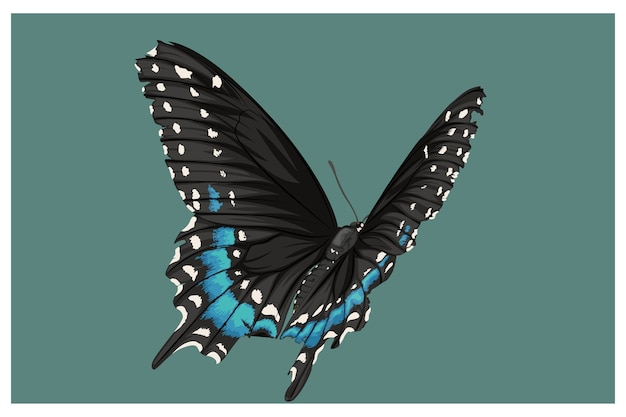 Mariposas azules y negras combinadas