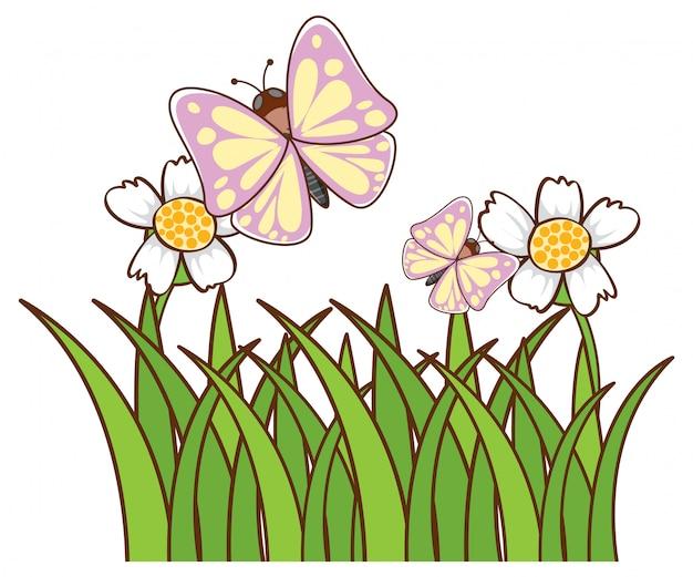 Mariposas en jardín en blanco